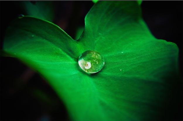 plant-water-drop_danist-soh_unsplash