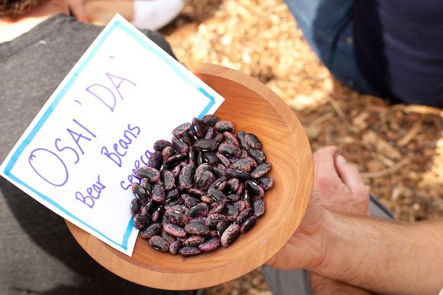 Bear Beans at Bioneers 2014 TEK photo by Republic of Light