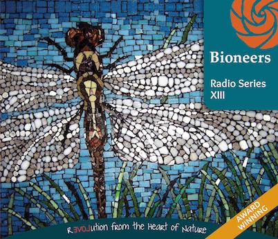 BIO102-RadioSeriesXIII-Cover-402