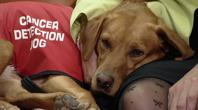 Some Dogs Can Sniff Out Cancer