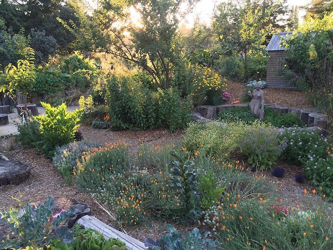 The Ohlsen homestead features over 100 food and medicinal plants, and captures hundreds of thousands of gallons of water.