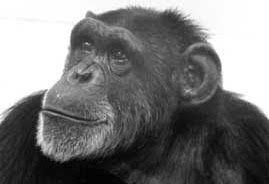 "This Week on Bioneers Radio, ""We're All Chimps: Or Are Animals Persons Too?"""