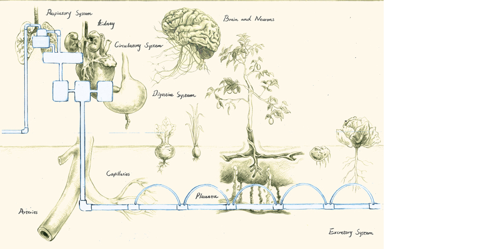 Using Biomimicry to Redesign the Food System