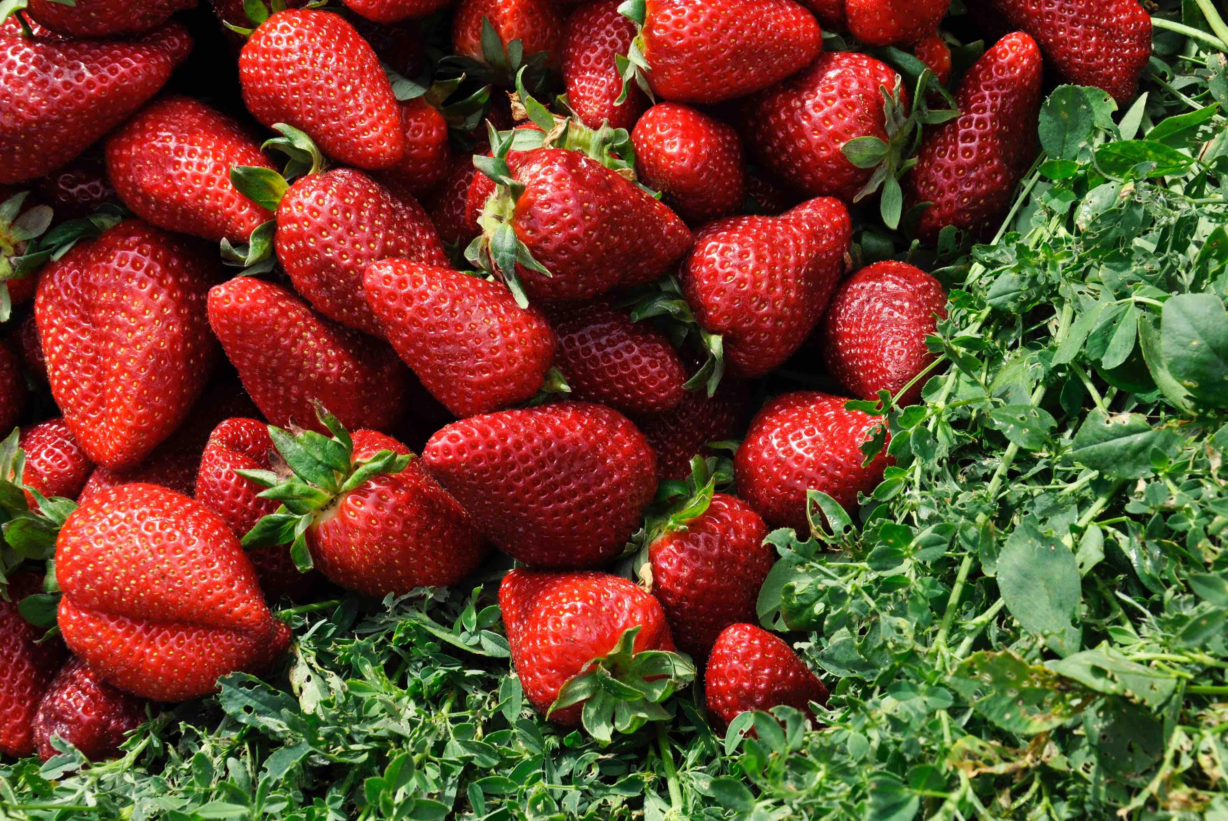Strawberry Fields Forever?