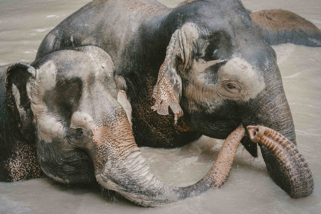 elephant-friends