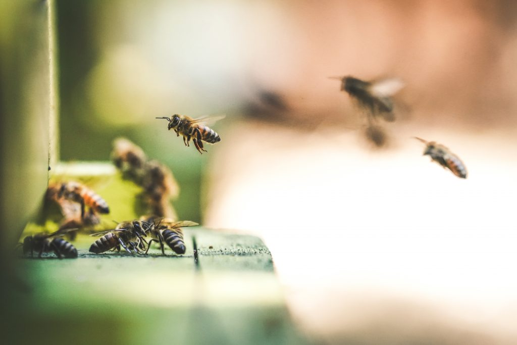 Saved by the Bee: Biomimicry and the Nature of Investing