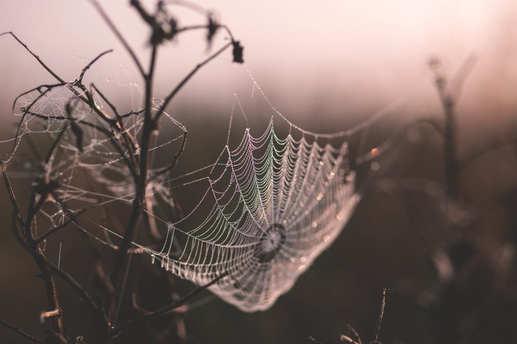 Biomimicry: What Would Nature Do Here?
