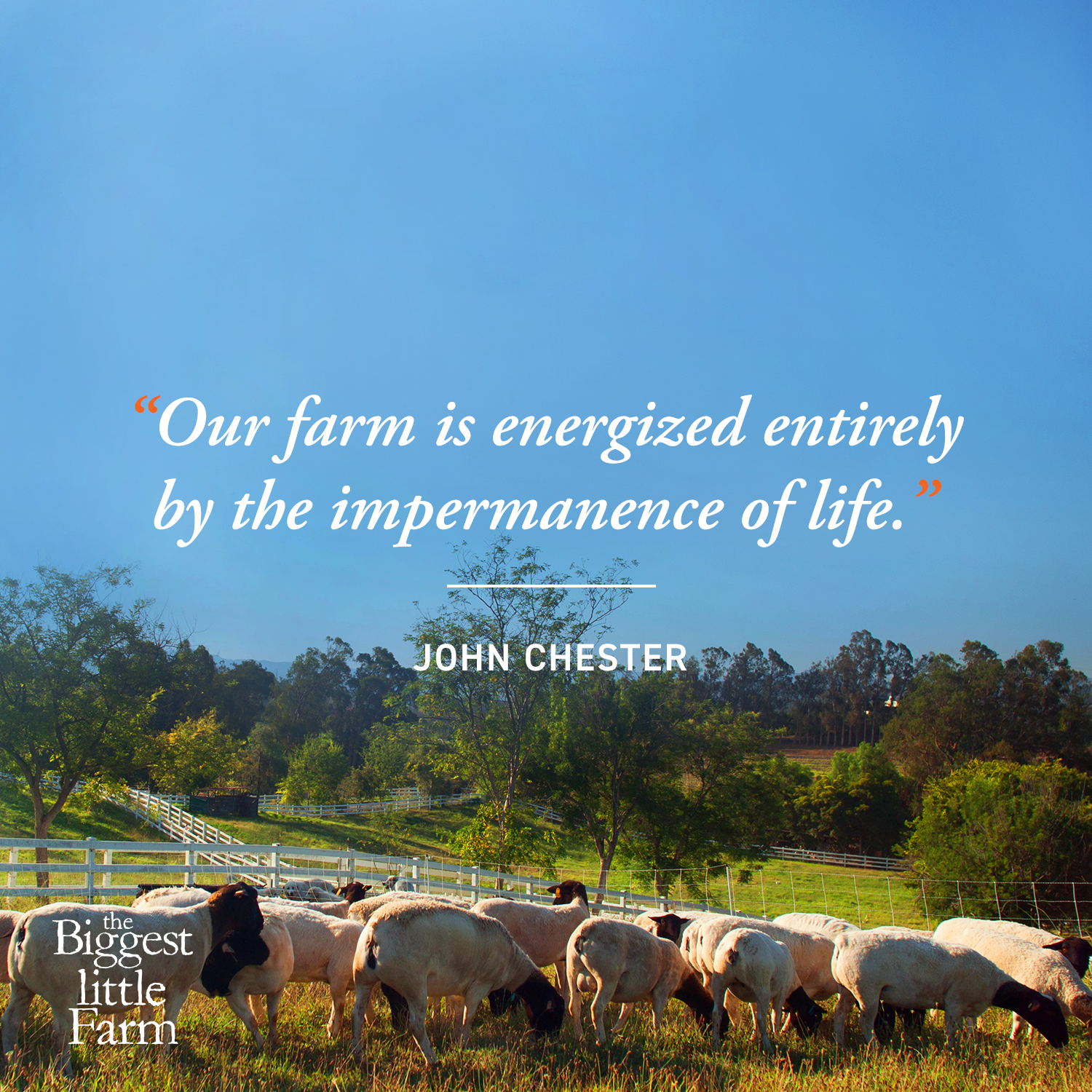 Farming, Filming and Biodiversity: An Interview with John Chester