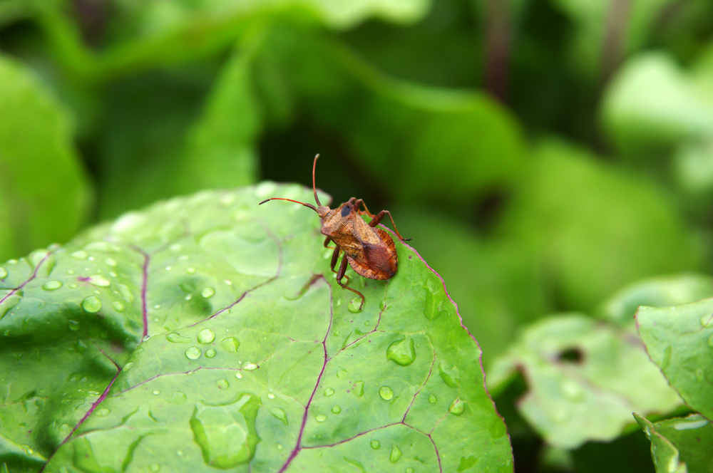 Garden Pests and Weeds: Bob Cannard's Unique Take