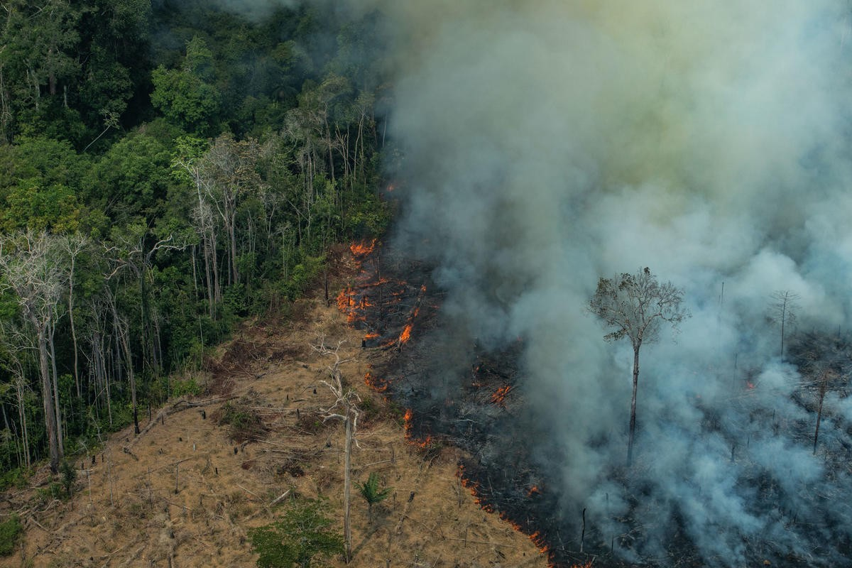 The Amazon is Burning: How, Why & What Can We Do?