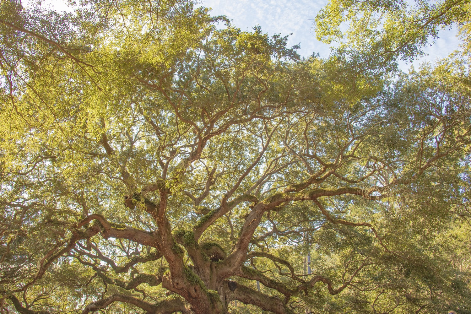 Restoring the Oaks and Our Connection to the Earth: An Interview with Jolie Elan