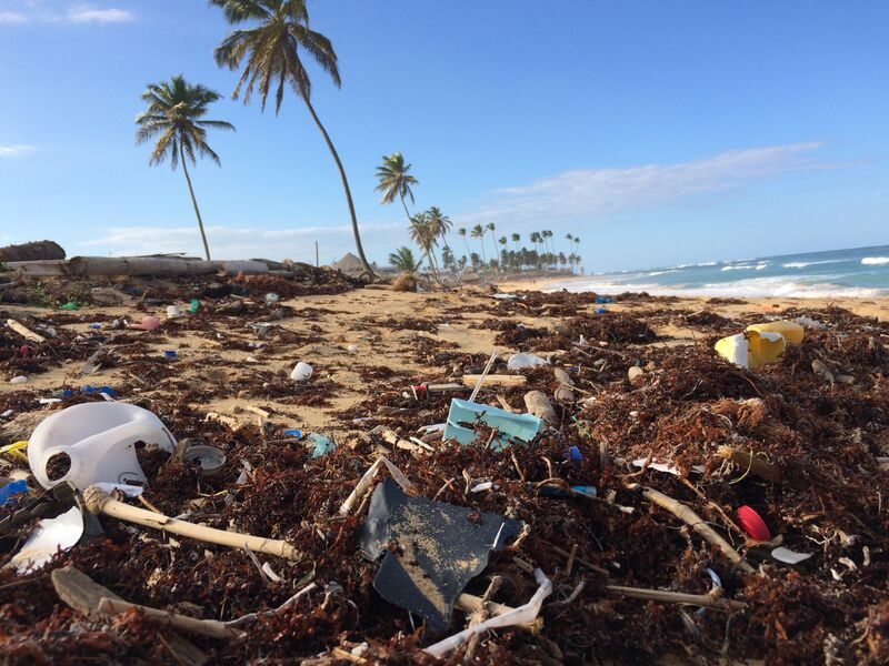 Creating A Future Less Disposable Than Our Plastics
