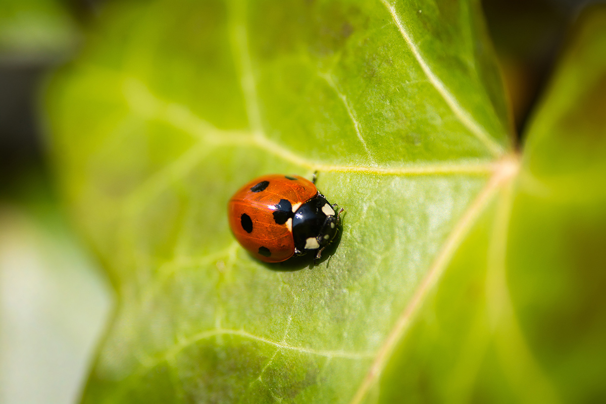 Pest Control Designed by Nature: An Interview with Ron Whitehurst