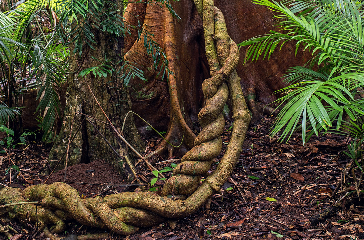 Ayahuasca in the 21st Century