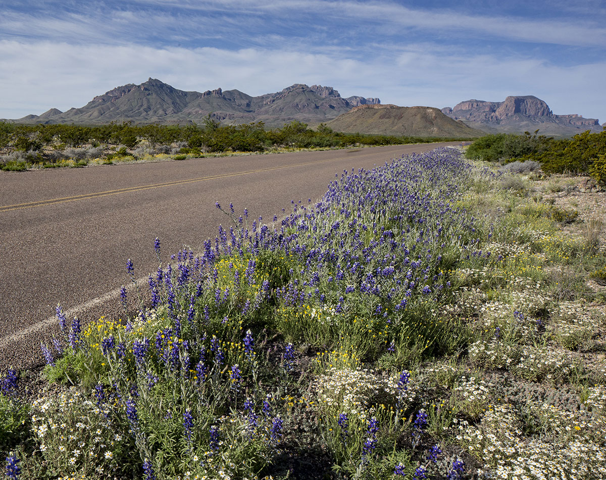 Big Bend Park Road to Panther Junction in the Spring. Photo copyright Al Braden